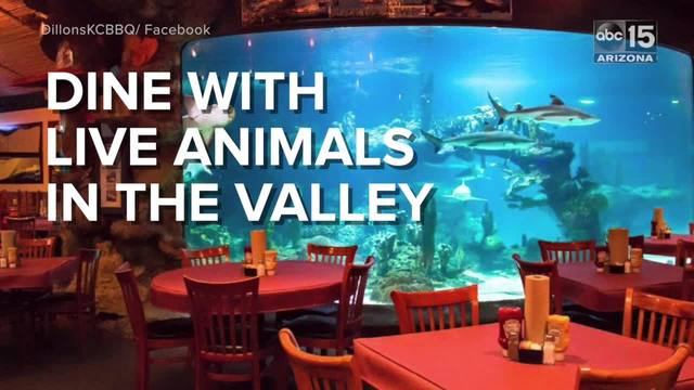 Dine Next To A 60 000 Gallon Shark Tank Or Have Tails With Atoos