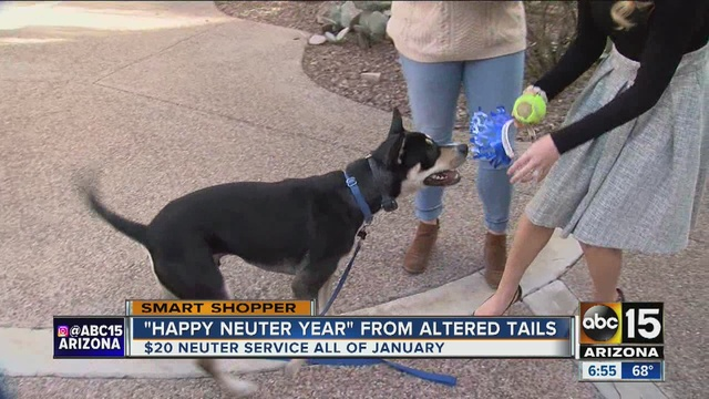 Theres An Effort Going Around To Help Neuter Dogs And Cats In The Valley