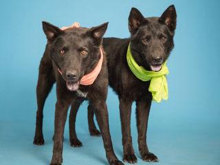 PETS: Meet Scorpio and Sagittarius!