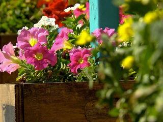 Gardening program created for juvenile offenders