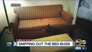 Dog companies offering aid to sniff out bed bugs