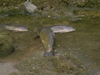 Hundreds of dead fish found in Goodyear canal