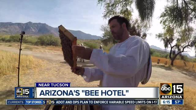 Arizona-s Miraval Resort near Tucson part of -bee hotel- trend