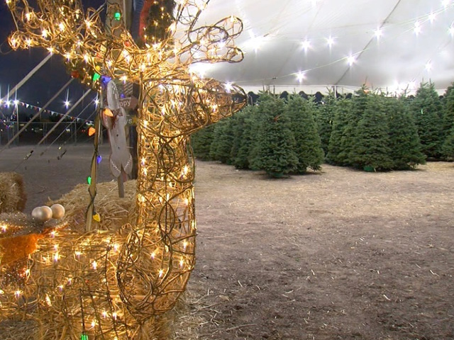 Christmas tree shortage could send stock down, prices up