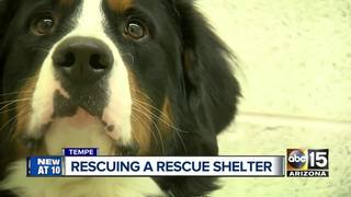 Tempe animal shelter needs rescuing