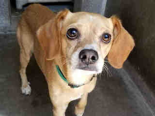25 pets up for adoption in the Valley