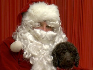 Santa poses with pups for 'howl-a-day' photos