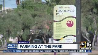 Phoenix park could be home to urban farm, market
