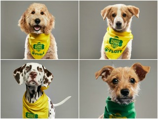 Animal Planet Puppy Bowl XIV: Meet the puppies!