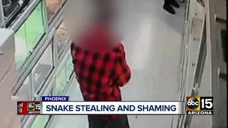 Thieves seen on video stealing snakes from shop