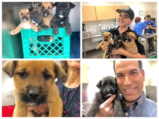MCACC: Pups left in crate during Valley showers