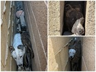 Dogs rescued after being found wedged by a wall