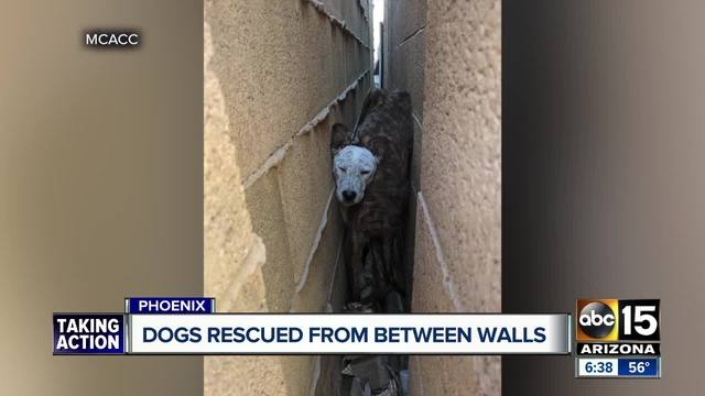 Dogs rescued from between walls by animal control