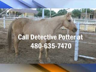 Horse shot and killed in Gilbert