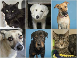 PHOTOS: 22 pets up for adoption in the Valley