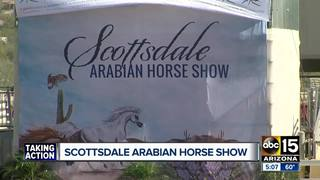 What to see at the Scottsdale Arabian Horse Show