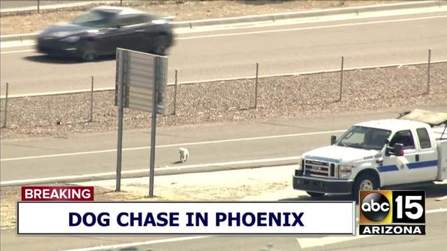 Dog chase backs up traffic on Phoenix highway