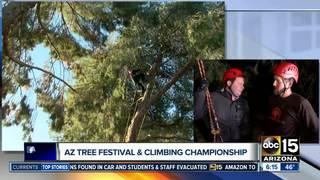 AZ tree-climbing champ to defend title
