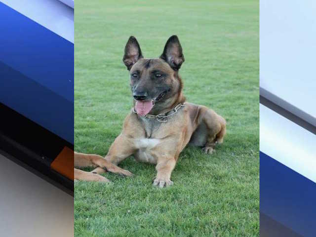 Mesa K9 officer Aik passes away from pneumonia - ABC15 Arizona 1