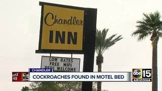 Customers find cockroaches at Chandler Motel