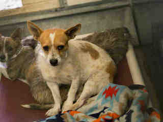 25 adoptable pets in the Valley