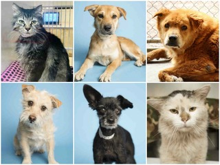 20 pets up for adoption in the Valley