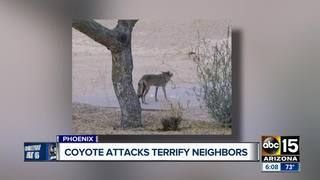 Pet owner warning others after coyote attack