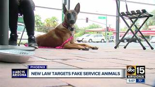 New AZ law aims to curb fake service animals