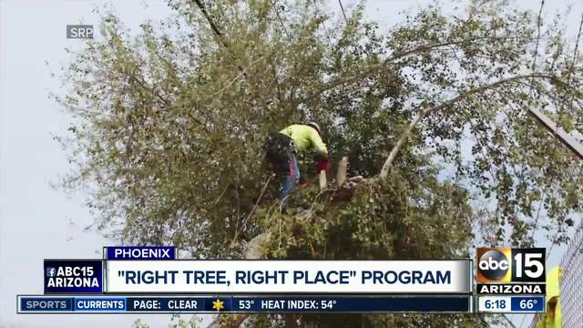 Arbor Day Foundation names Watertown a 2017 Tree City USA
