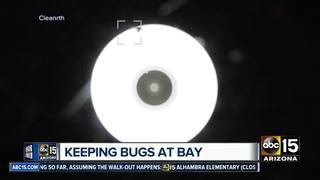 Buckeye men develop FlyLight to curb pesky bugs