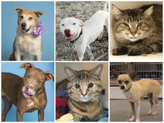 20 pets up for adoption now in the Valley