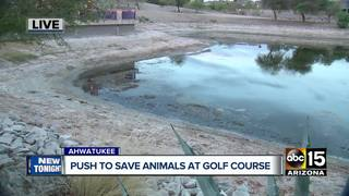 PHX community concerned for fish in drying pond