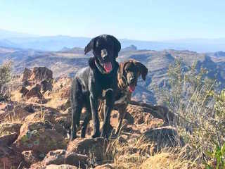 Hikers find 2 dogs stranded on Superior mountain