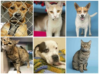 22 pets up for adoption in the Valley