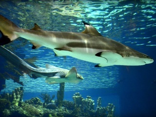 SPLASH! 4 places to see sharks in the Valley