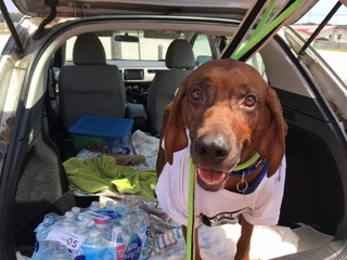 MAP: Volunteers drive dog 2,000 miles back to AZ