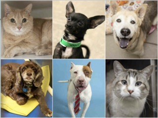 20 pets up for adoption right now in the Valley
