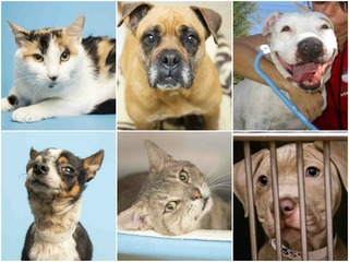 24 pets up for adoption in the Valley