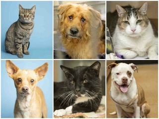 21 pets up for adoption in the Valley