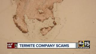 Valley experts warn homeowners of termite scam