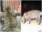 Known AZ jaguar shown dead in photo