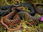 YIKES! 9 creepy non-venomous snakes in Phoenix