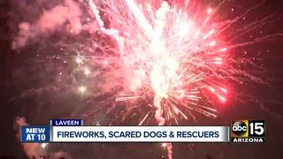 Laveen group rescues dogs scared by fireworks