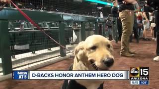 Dog saves owner from rattlesnake bite in Anthem