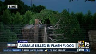 Pigs killed, home destroyed in Laveen flooding