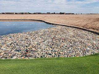 Dead fish found in Maricopa community ponds