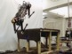 "BLIND ROBOT? Galloping robot climbs w/o ""seeing"""