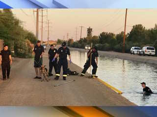 Pup gets rescued from Phoenix canal