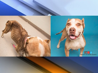 Gravely ill dog makes recovery, waits for family