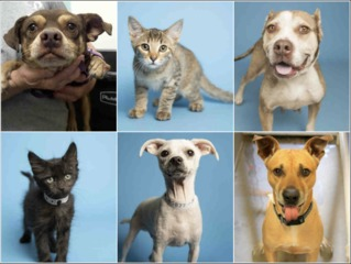 21 pets up for adoption now in the Valley